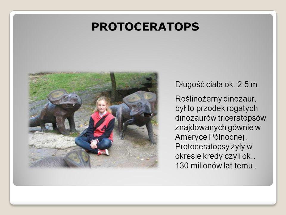 PROTOCERATOPS Długość ciała ok. 2.5 m.