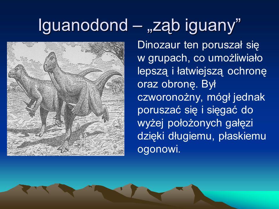 "Iguanodond – ""ząb iguany"
