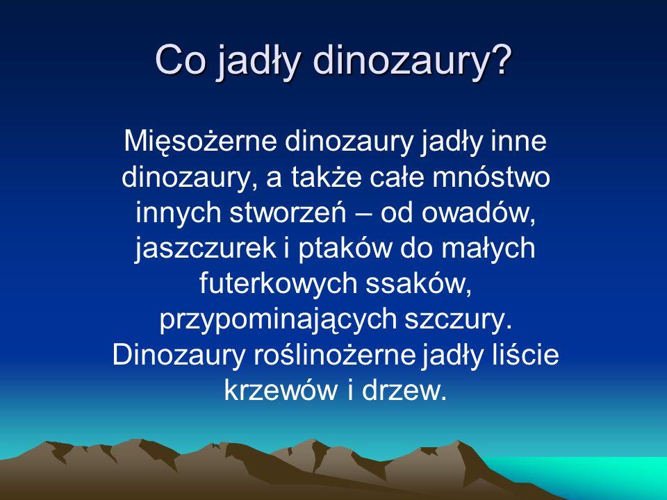 Co jadły dinozaury
