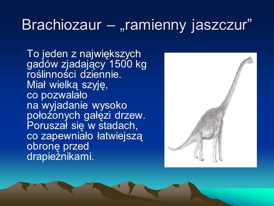 """Brachiozaur – """"ramienny jaszczur"""