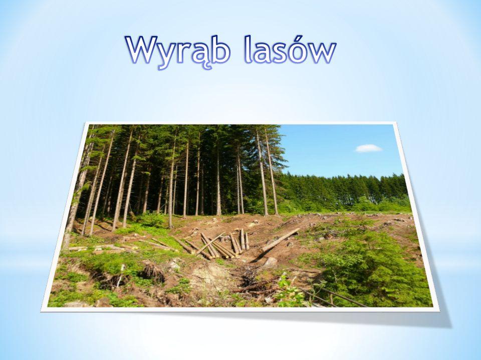 Wyrąb lasów
