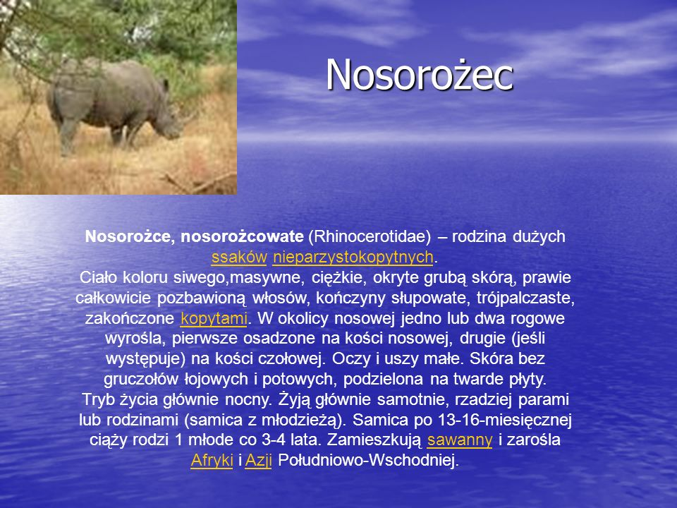 Nosorożec Nosorożce, nosorożcowate (Rhinocerotidae) – rodzina dużych ssaków nieparzystokopytnych.