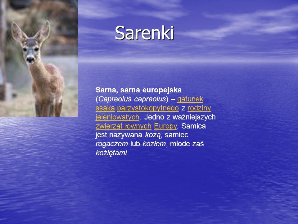 Sarenki