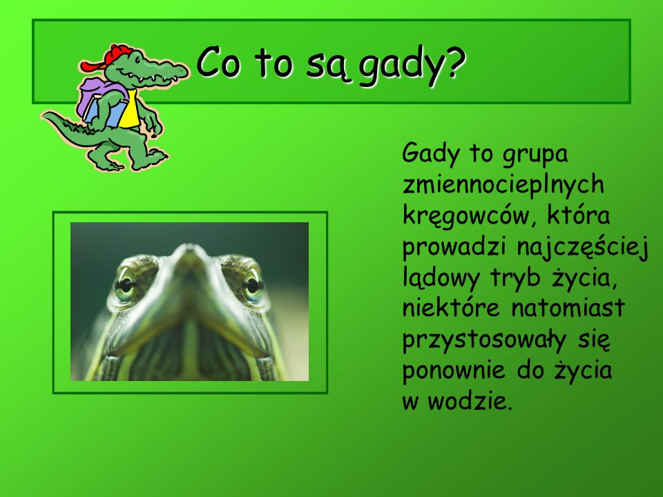 Co to są gady