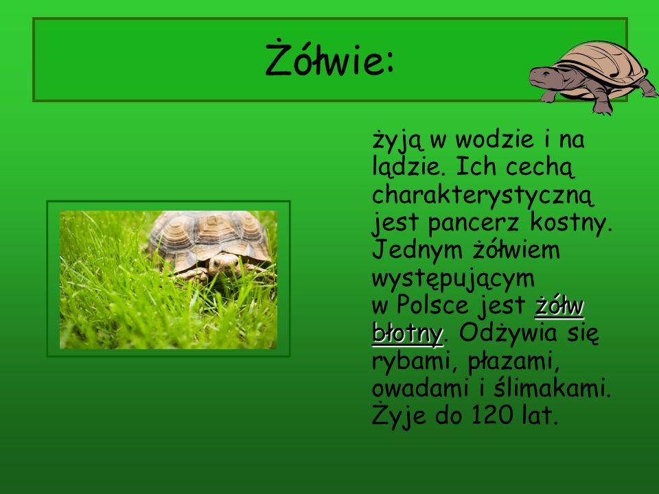 Żółwie:
