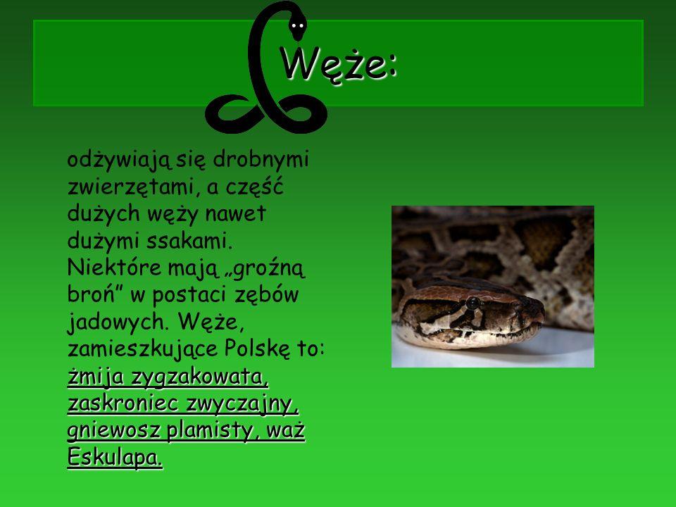 Węże: