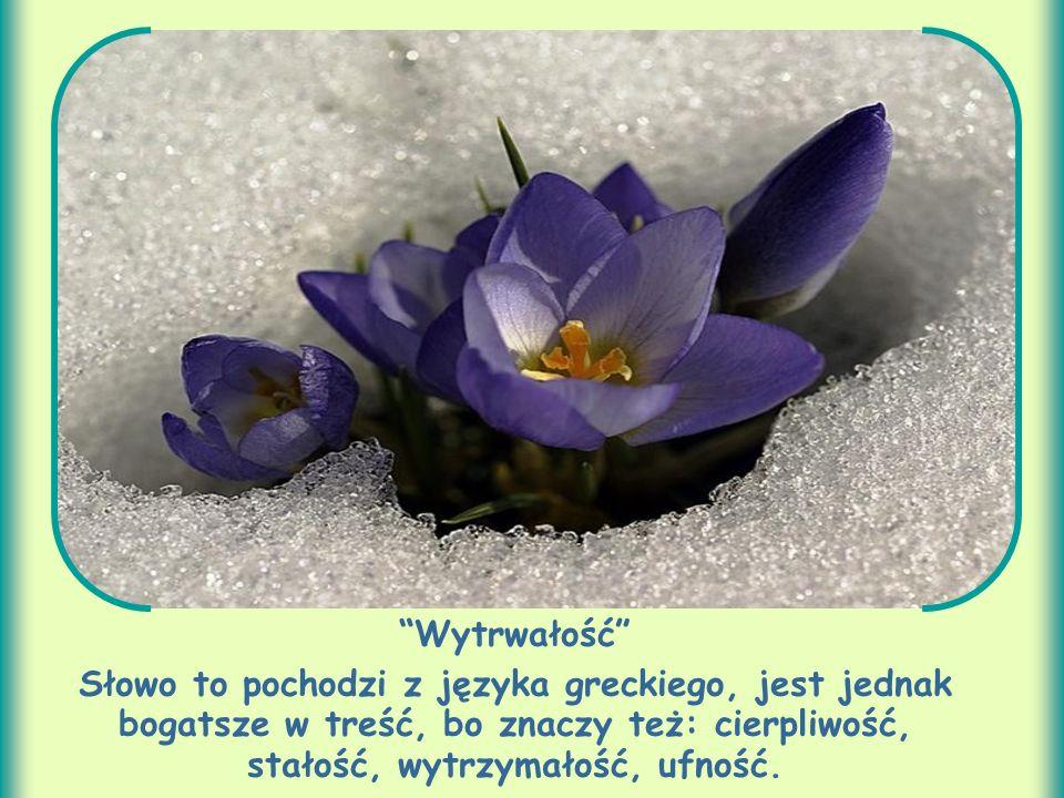 Wytrwałość Słowo to pochodzi z języka greckiego, jest jednak bogatsze w treść, bo znaczy też: cierpliwość, stałość, wytrzymałość, ufność.