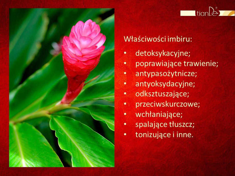 Właściwości imbiru: detoksykacyjne; poprawiające trawienie; antypasożytnicze; antyoksydacyjne; odksztuszające;