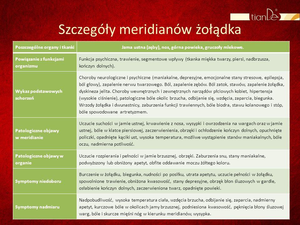 Szczegóły meridianów żołądka