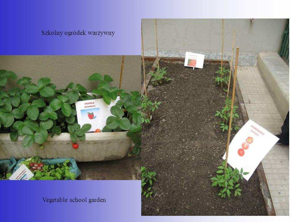 Szkolny ogródek warzywny