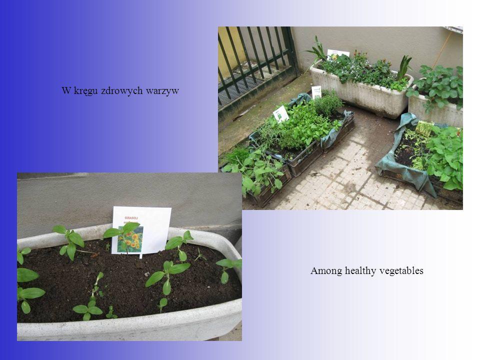 W kręgu zdrowych warzyw