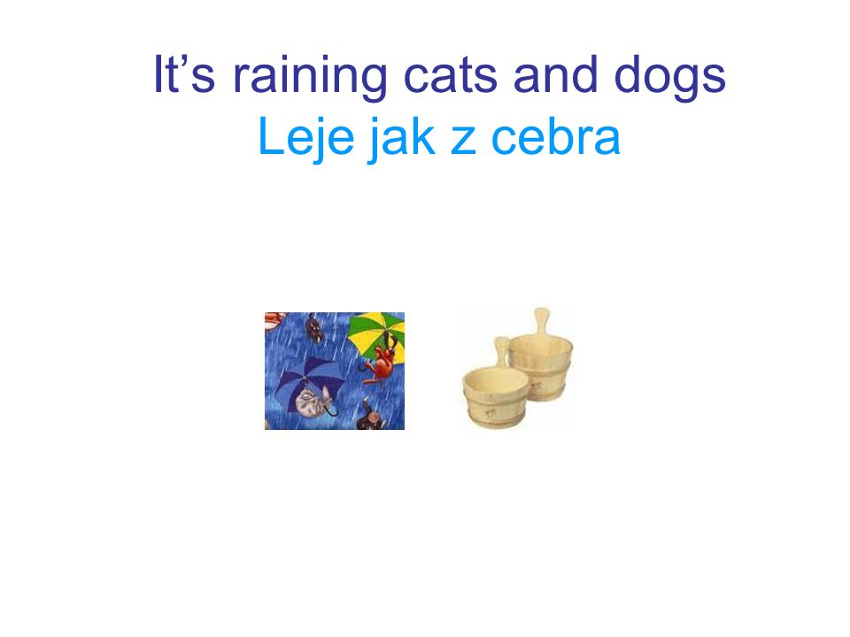 It's raining cats and dogs Leje jak z cebra