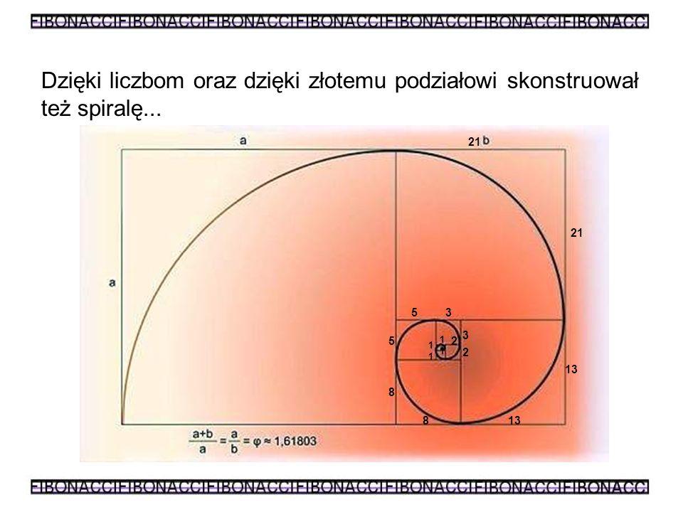 Dzięki liczbom oraz dzięki złotemu podziałowi skonstruował też spiralę...