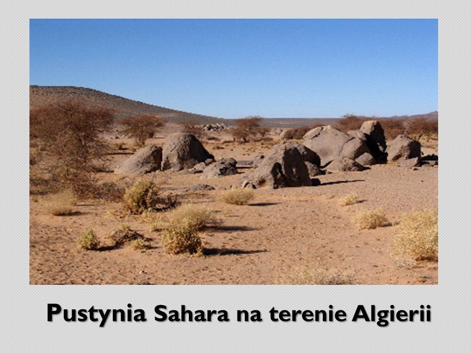 Pustynia Sahara na terenie Algierii