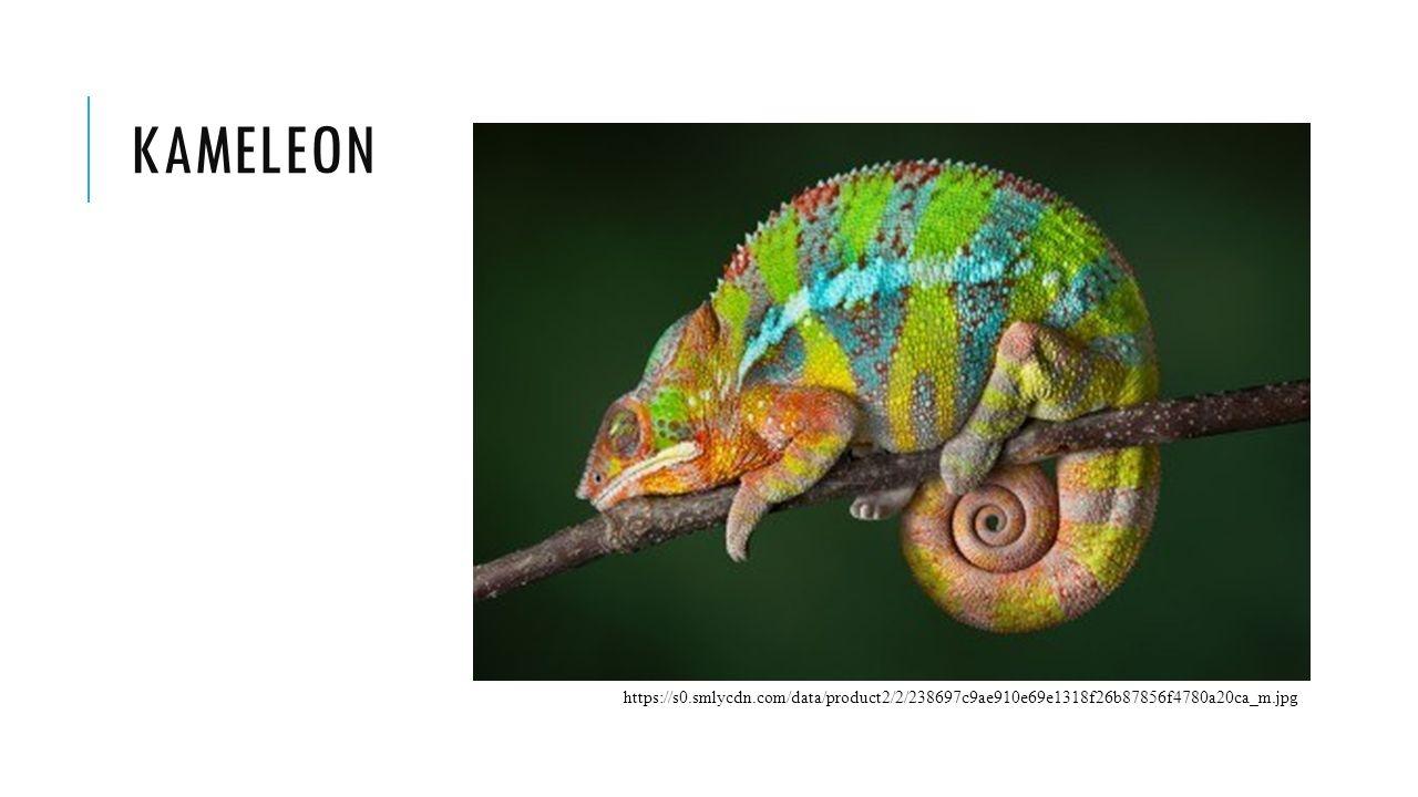kameleon https://s0.smlycdn.com/data/product2/2/238697c9ae910e69e1318f26b87856f4780a20ca_m.jpg