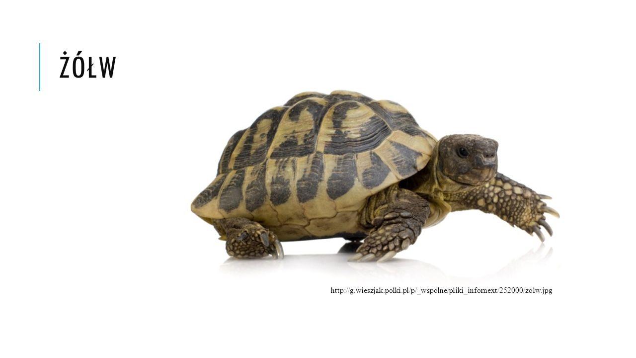 żółw http://g.wieszjak.polki.pl/p/_wspolne/pliki_infornext/252000/zolw.jpg