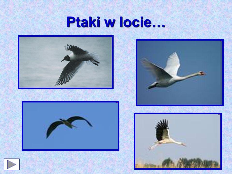 Ptaki w locie…