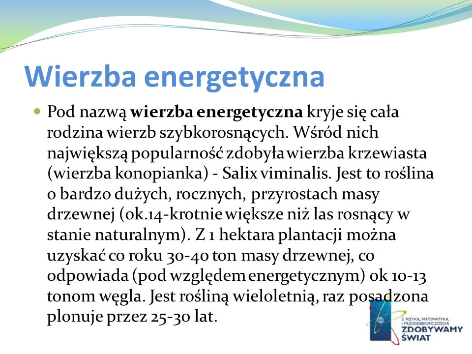 Wierzba energetyczna