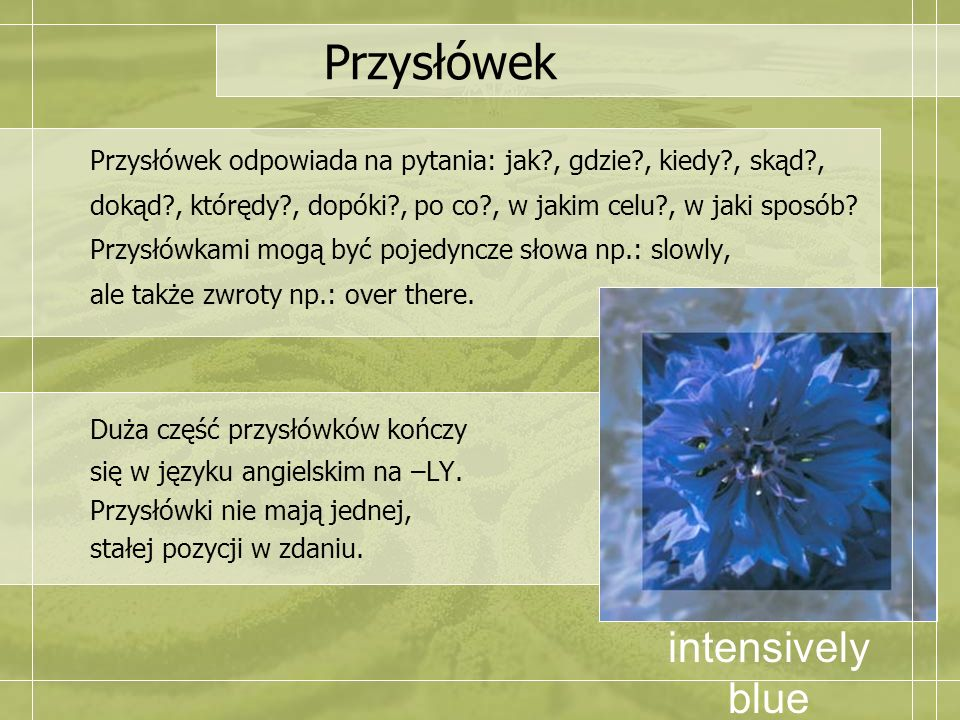 Przysłówek intensively blue