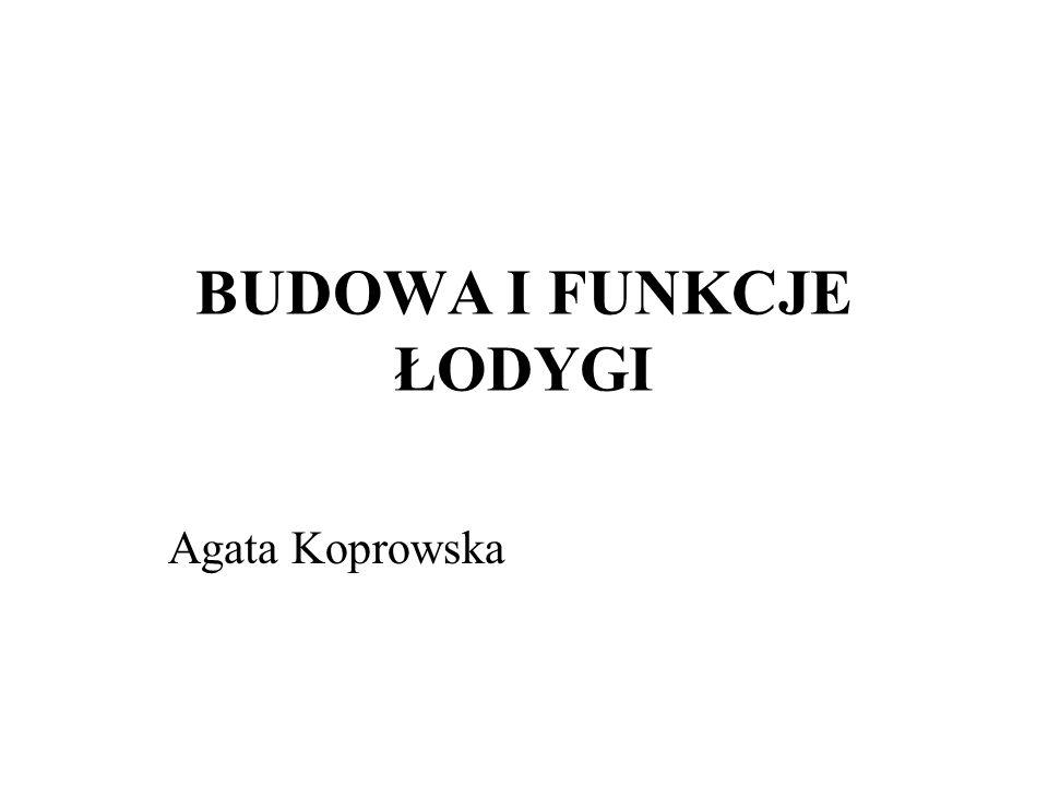 BUDOWA I FUNKCJE ŁODYGI
