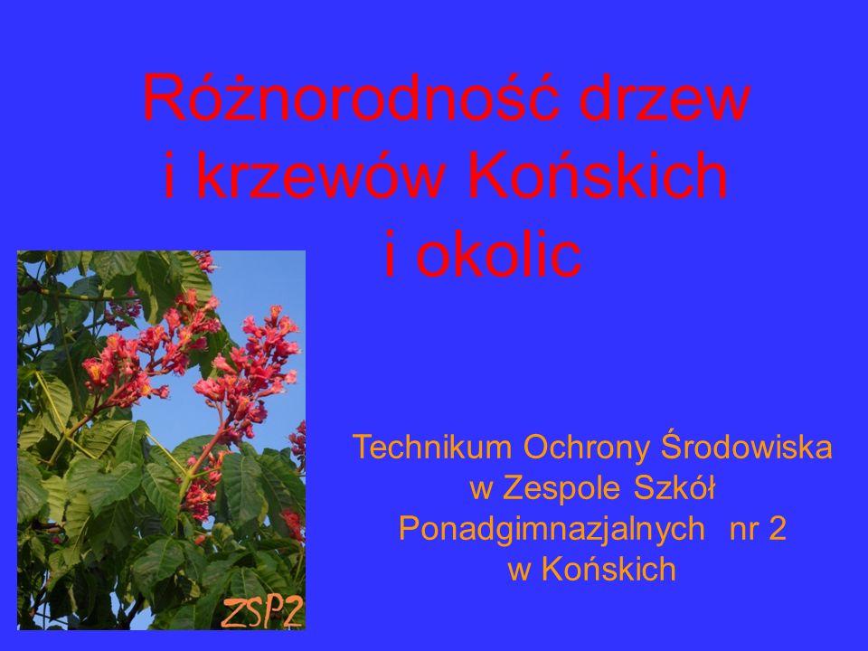 Różnorodność drzew i krzewów Końskich i okolic