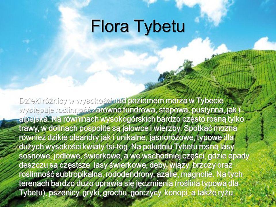 Flora Tybetu