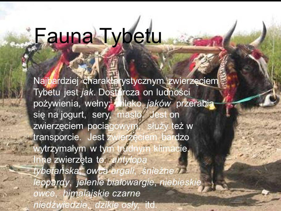 Fauna Tybetu