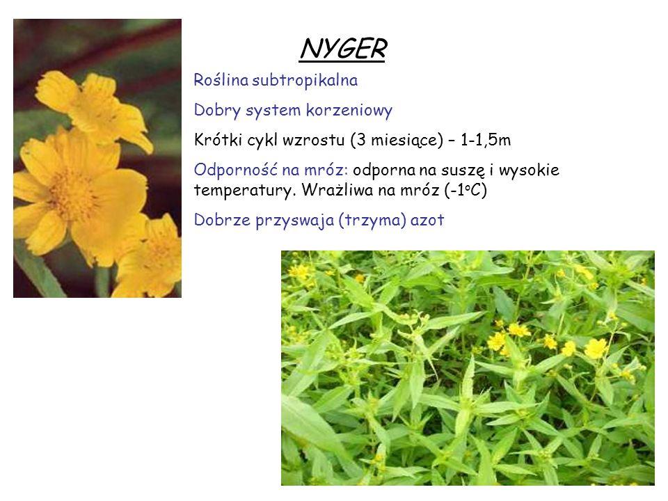 NYGER Roślina subtropikalna Dobry system korzeniowy