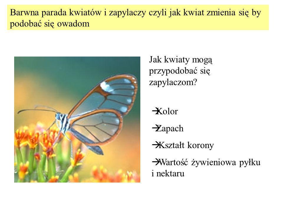 Barwna parada kwiatów i zapylaczy czyli jak kwiat zmienia się by podobać się owadom
