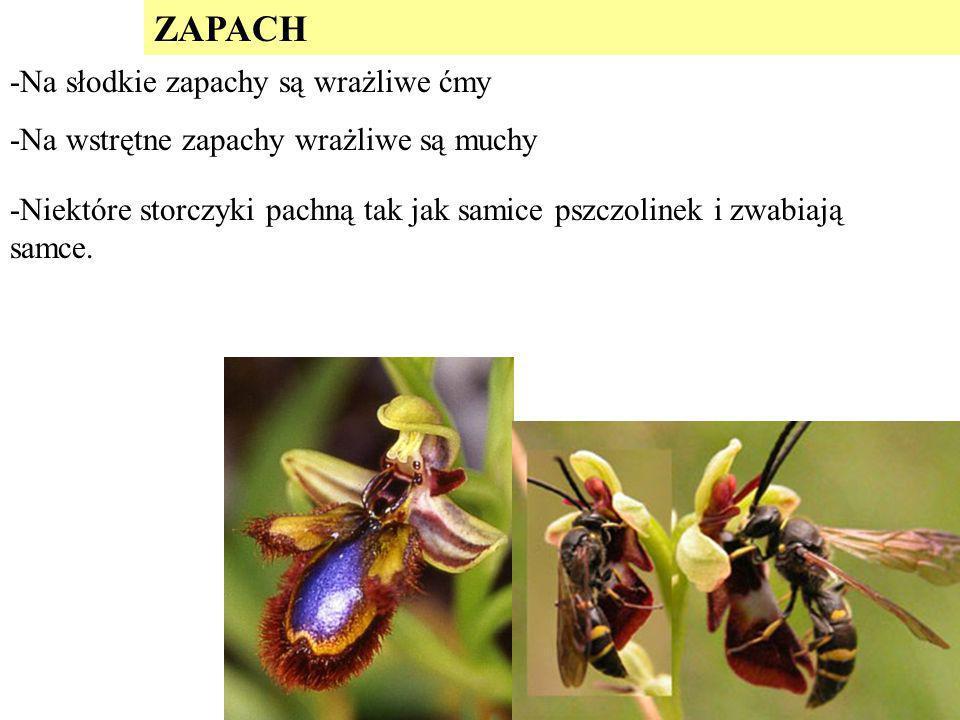 ZAPACH -Na słodkie zapachy są wrażliwe ćmy
