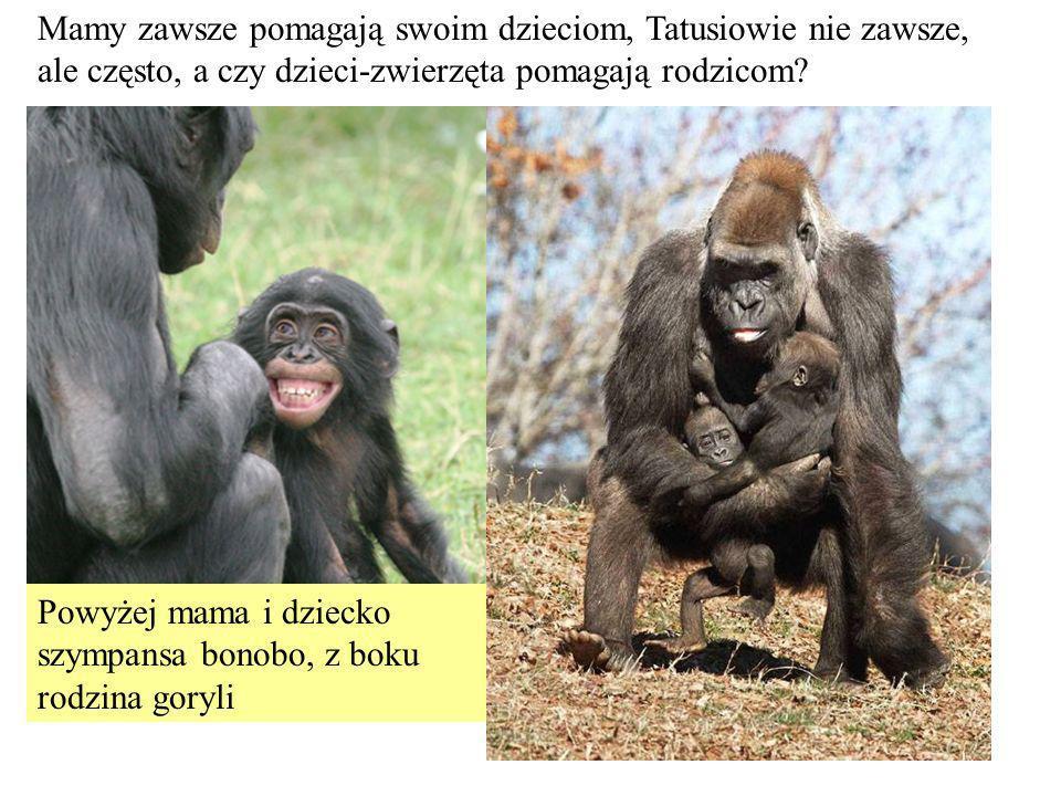 Mamy zawsze pomagają swoim dzieciom, Tatusiowie nie zawsze, ale często, a czy dzieci-zwierzęta pomagają rodzicom