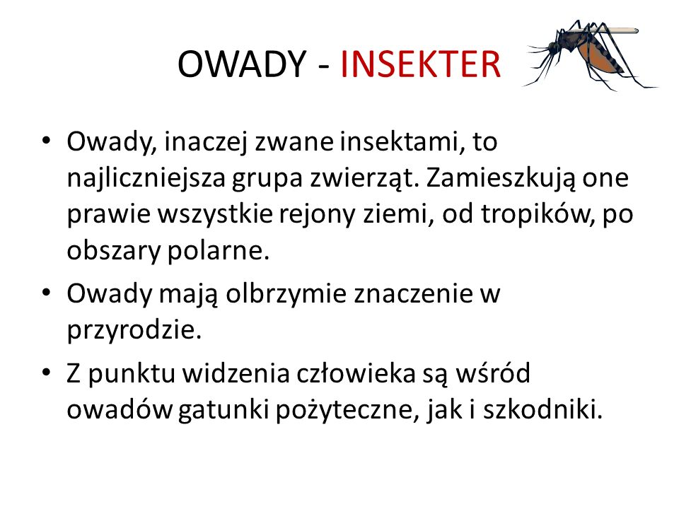 OWADY - INSEKTER