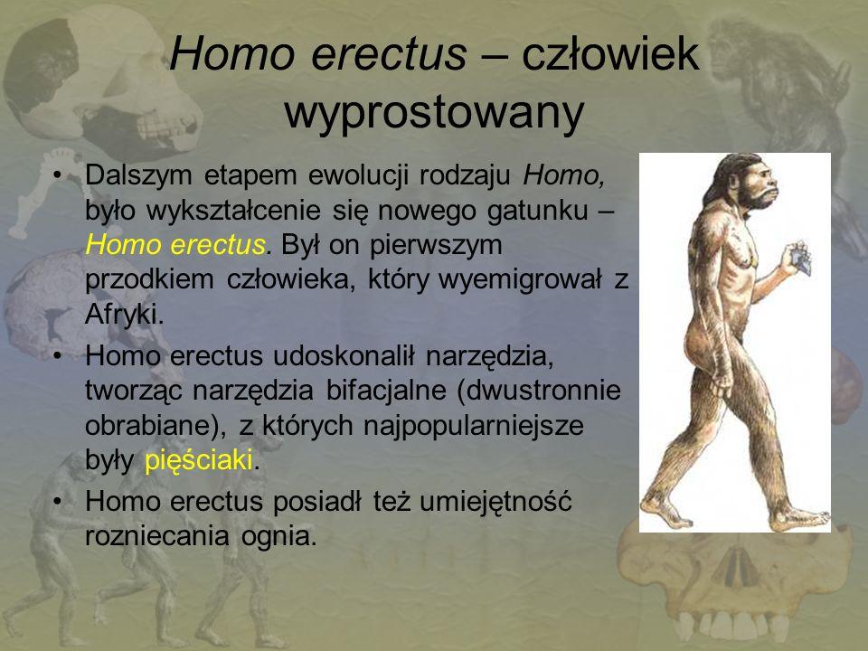 Homo erectus – człowiek wyprostowany
