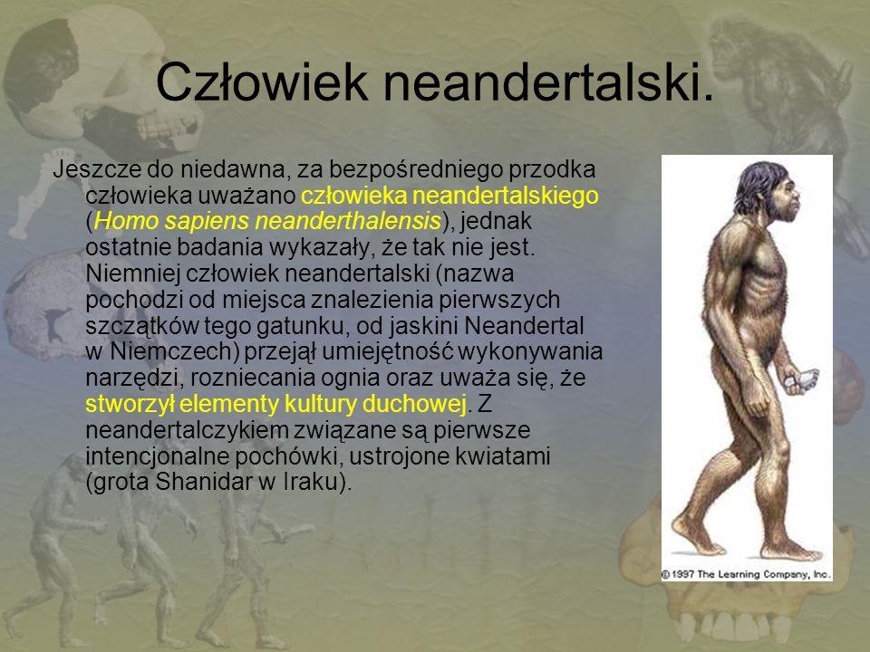 Człowiek neandertalski.
