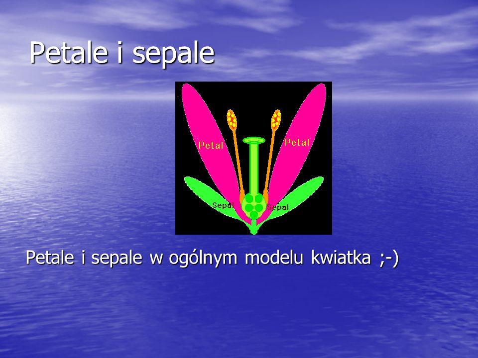Petale i sepale Petale i sepale w ogólnym modelu kwiatka ;-)