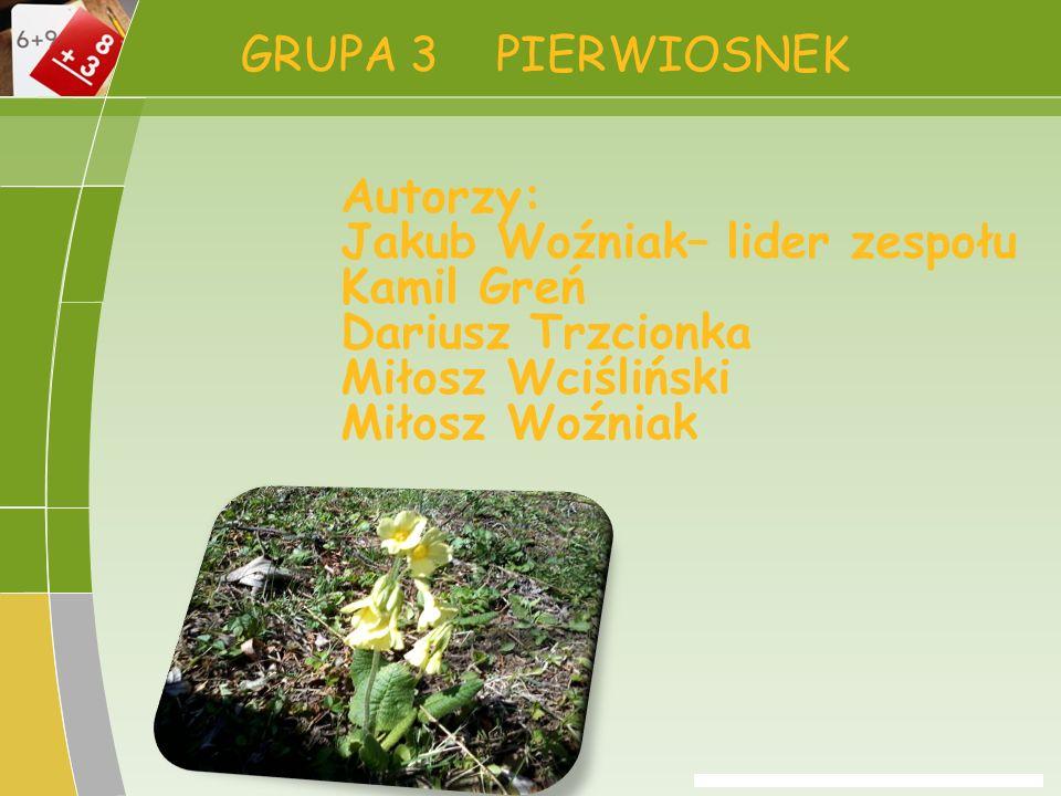 GRUPA 3 PIERWIOSNEK Autorzy: Jakub Woźniak– lider zespołu. Kamil Greń. Dariusz Trzcionka. Miłosz Wciśliński.