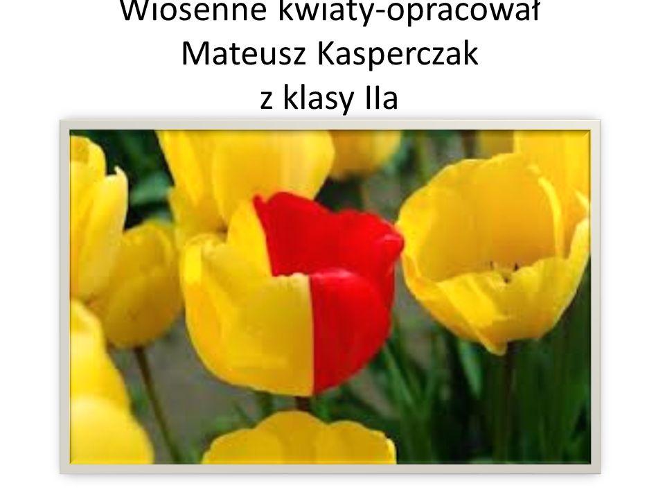 Wiosenne kwiaty-opracował Mateusz Kasperczak z klasy IIa