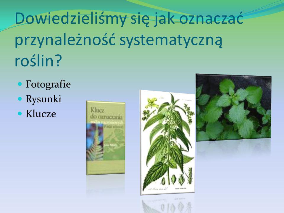 Dowiedzieliśmy się jak oznaczać przynależność systematyczną roślin