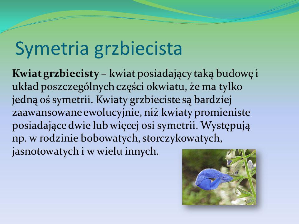 Symetria grzbiecista