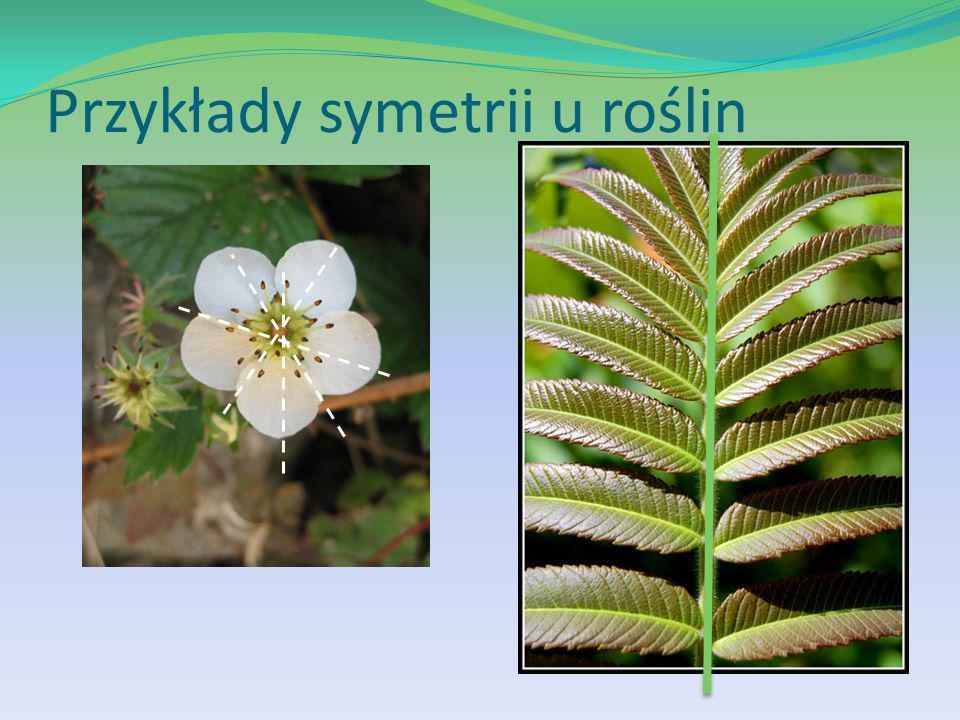 Przykłady symetrii u roślin