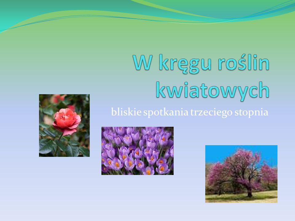 W kręgu roślin kwiatowych
