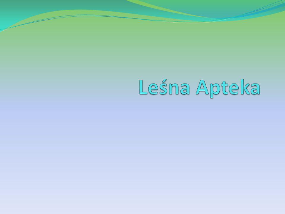 Leśna Apteka