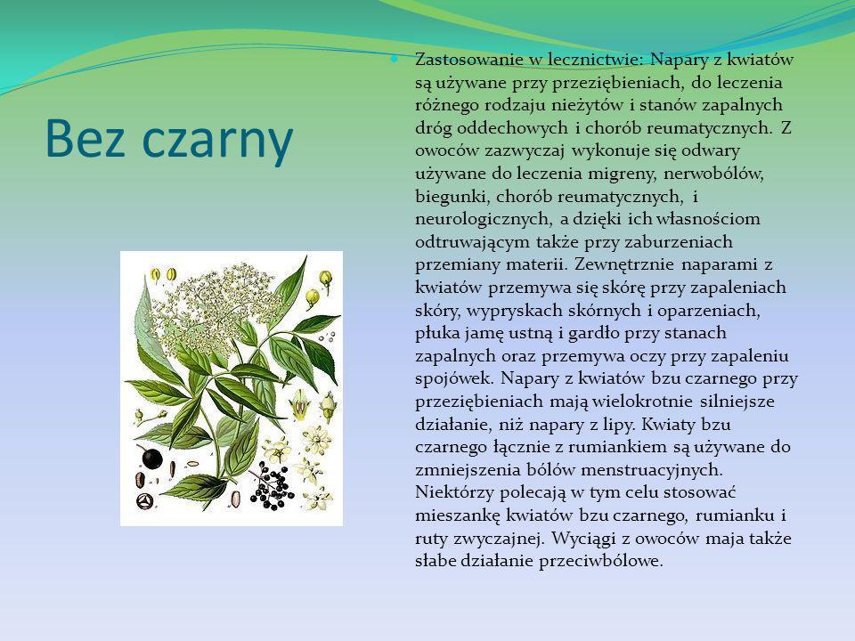 Zastosowanie w lecznictwie: Napary z kwiatów są używane przy przeziębieniach, do leczenia różnego rodzaju nieżytów i stanów zapalnych dróg oddechowych i chorób reumatycznych. Z owoców zazwyczaj wykonuje się odwary używane do leczenia migreny, nerwobólów, biegunki, chorób reumatycznych, i neurologicznych, a dzięki ich własnościom odtruwającym także przy zaburzeniach przemiany materii. Zewnętrznie naparami z kwiatów przemywa się skórę przy zapaleniach skóry, wypryskach skórnych i oparzeniach, płuka jamę ustną i gardło przy stanach zapalnych oraz przemywa oczy przy zapaleniu spojówek. Napary z kwiatów bzu czarnego przy przeziębieniach mają wielokrotnie silniejsze działanie, niż napary z lipy. Kwiaty bzu czarnego łącznie z rumiankiem są używane do zmniejszenia bólów menstruacyjnych. Niektórzy polecają w tym celu stosować mieszankę kwiatów bzu czarnego, rumianku i ruty zwyczajnej. Wyciągi z owoców maja także słabe działanie przeciwbólowe.