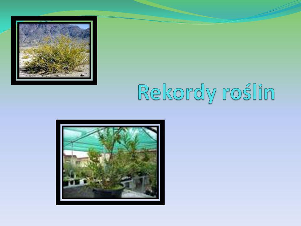 Rekordy roślin