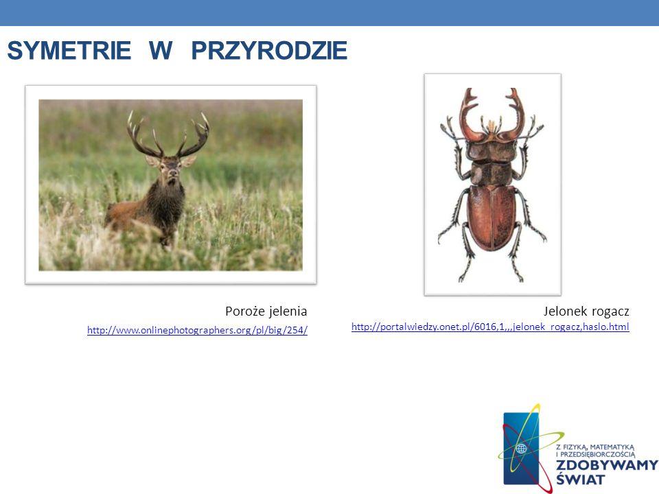 Symetrie w przyrodzie Poroże jelenia http://www.onlinephotographers.org/pl/big/254/