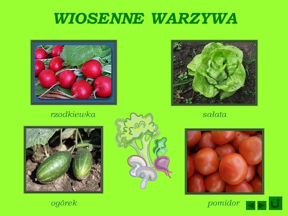 WIOSENNE WARZYWA rzodkiewka sałata ogórek pomidor