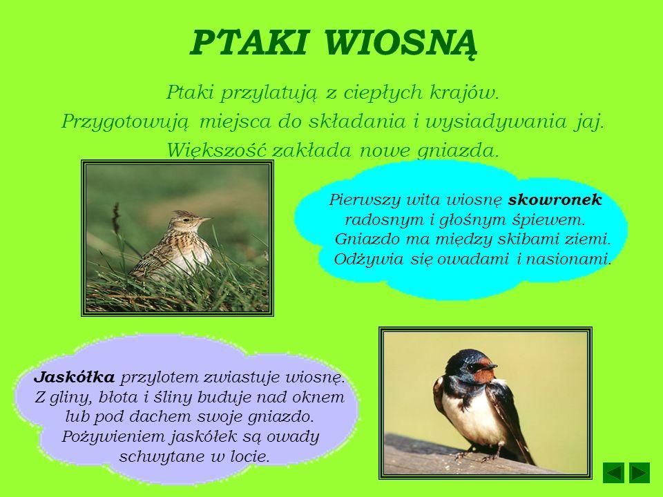 PTAKI WIOSNĄ Ptaki przylatują z ciepłych krajów.