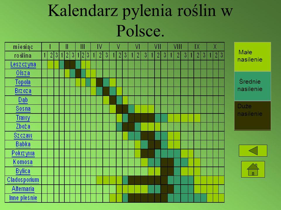 Kalendarz pylenia roślin w Polsce.