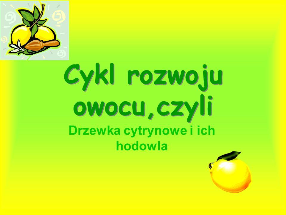 Cykl rozwoju owocu,czyli
