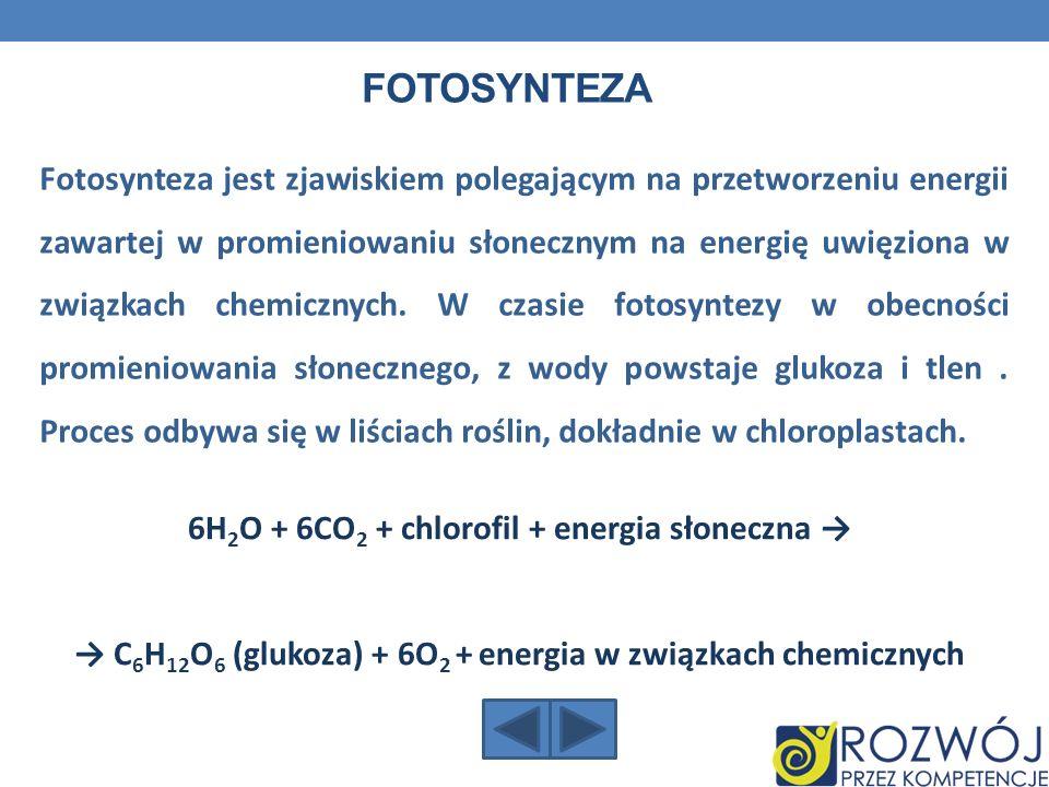 6H2O + 6CO2 + chlorofil + energia słoneczna →